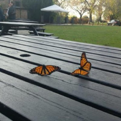 Chrysalis care Fostering London - Butterfly